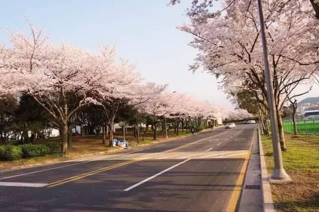 三亚·海棠湾国家水稻公园