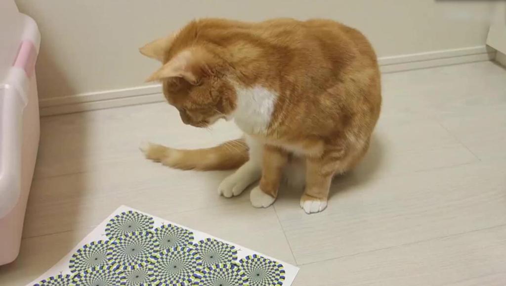给猫看视觉误差图,喵星人表示有毒,铲屎的TM给我下幻术!