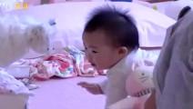饺子太可爱了,和狗狗打架惨被包文婧教训,宝宝反应亮了,蒙圈!