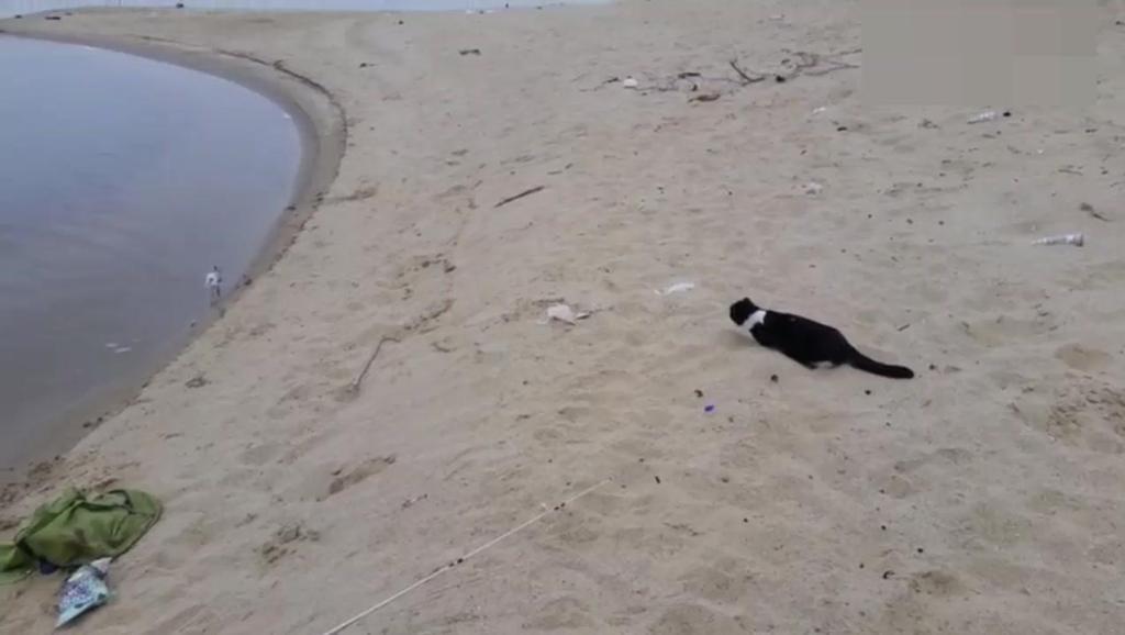 猫咪抓鸟,伺机而动,一出手太霸气了!