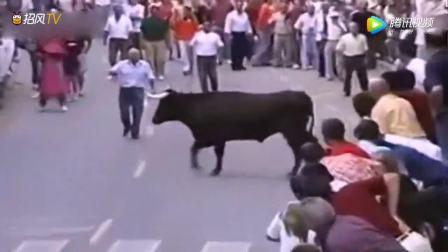 斗牛在人群中发现喂它的老饲养员,瞬间温柔如初恋!
