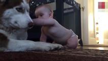 萌宝想摸摸二汪,刚伸出手狗子接下来的反应让全家人笑喷了