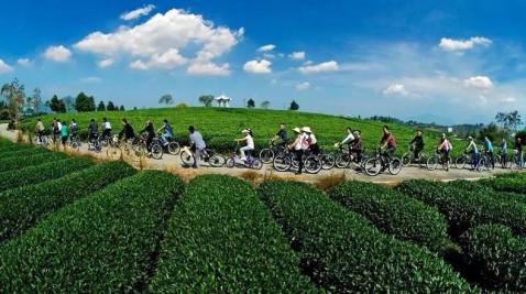 大木山骑行茶园是中国首个骑行茶园景区,位于中国绿茶第一镇——新兴
