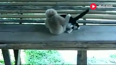 泰国猴子与猫的决斗直接让你笑喷