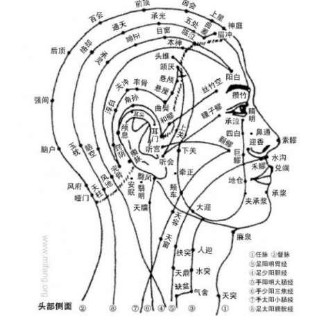 2大脑功能分区