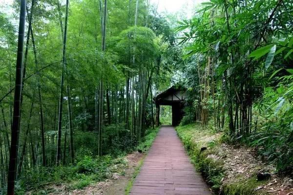 桃花江竹海风景区,位于益阳桃花江国家森林公园内,共拥有楠竹5万亩.