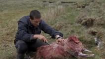 贝爷也很挑食啊,那么多羊肉只要那么点