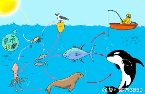 在海洋动物生态系统里,处于最底端的小鱼小虾的数量最多,食物链上一级