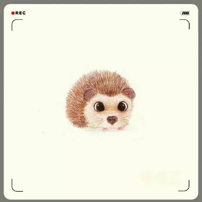 彩铅绘制的小动物, 超可爱, 心都要被萌化了