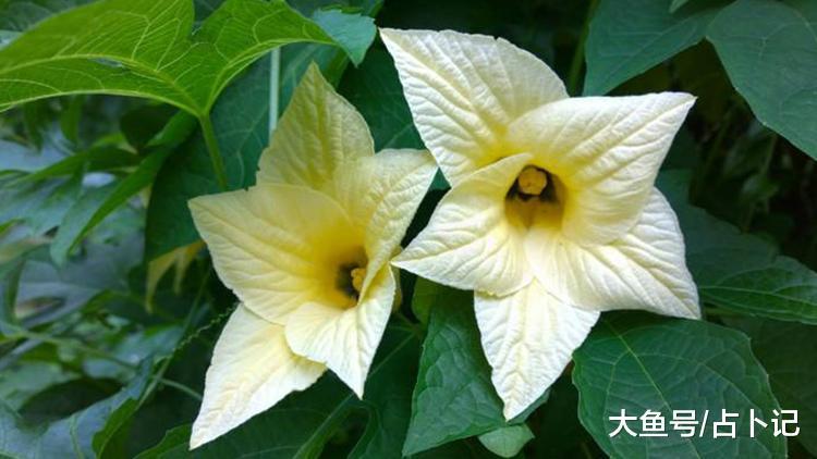 桃花朵朵开, 七月告别单身, 收获幸福美满的三个属相(图4)