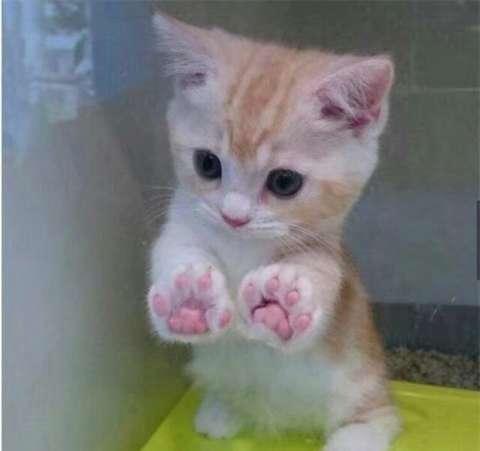 这不,一位网友的衣服被这小猫咪给挠坏了,于是主人为了惩罚它,将它关