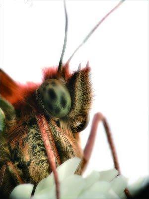 地球上10大最奇特的动物眼睛, 壁虎辨色能力是人类的350倍!