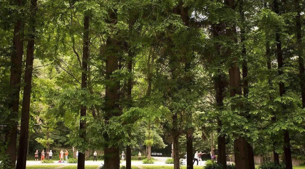 大气海绵纸贴画大树