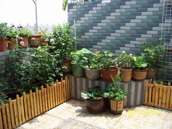 """楼顶上营造的清新居家""""小花园"""", 看花儿沐浴阳光雨露"""