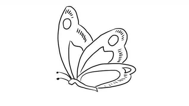 美丽的花蝴蝶幼儿亲子简笔画 宝宝轻松学画画视频