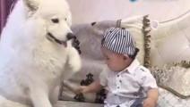 萨摩耶要摸小主人,小主人偏不让它摸,结果狗狗的举动好搞笑!