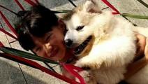 第一次做摇床的小阿拉斯加犬这表情也太开心了吧