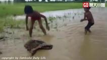 三米长蟒蛇被小屁孩玩坏,这种神兽在非洲已经快混不下去了