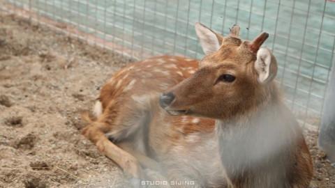 茫茫香! 传说中很low的台州湾野生动物园, 到底有多low?