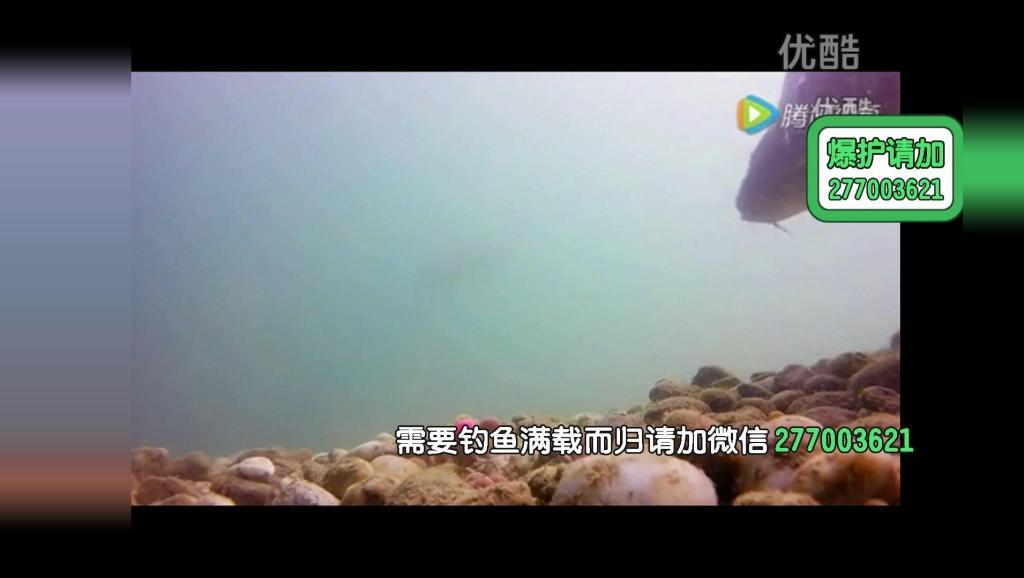 黑坑新放青鱼怎样钓野钓的技巧(2)黑坑江湖用的饵料配方
