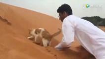 猫咪: 怎么越挖越后退呢?总有刁民想害朕 #搞笑君神回复