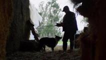 开眼视频:超感人的狗狗视频,你们是真正人类最好的朋友!