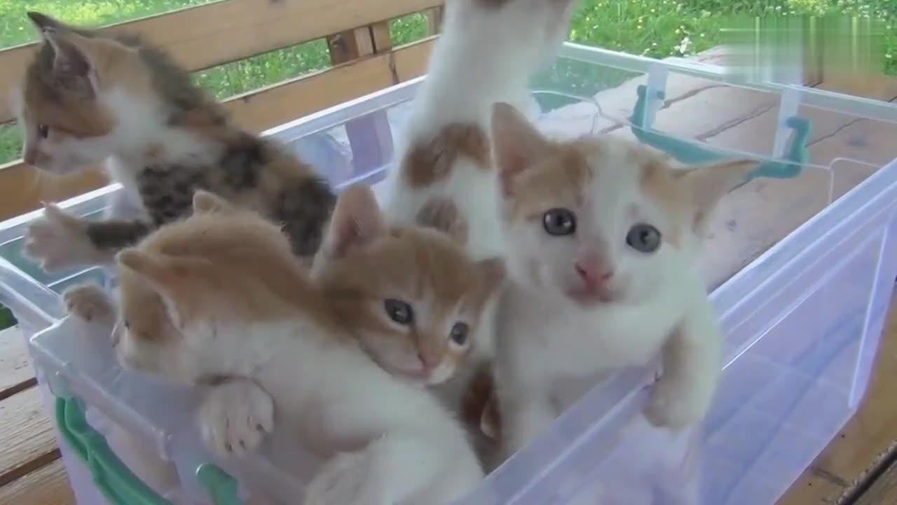 超可爱小猫