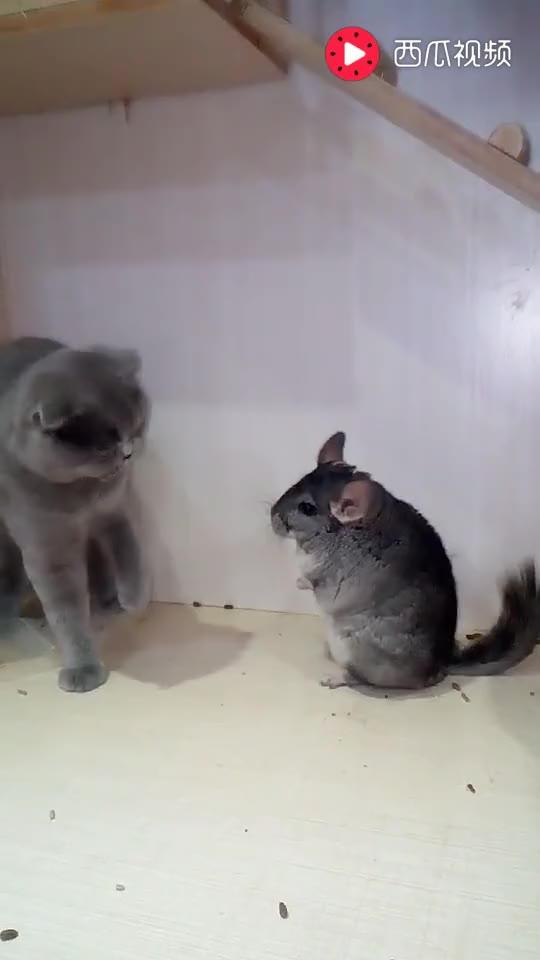 快来围观猫和老鼠斗, 到底谁胜谁负, 你知道吗?
