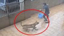 偷狗贼入室偷狗,全过程被记录