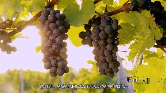 葡萄美酒夜光杯?法国波尔多葡萄酒产区