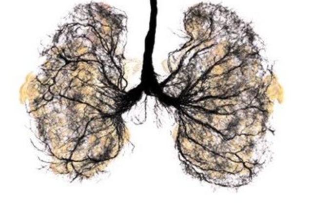 冬季喝这几种清肺茶! 清肺润燥不伤胃, 老烟民的黑肺慢慢变红润!