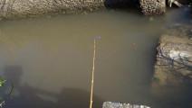 钓鱼: 小水沟里有很多鱼,品种繁多,非常好钓