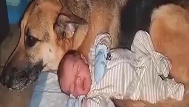把狗狗和宝宝单独留家里,监控拍下的一幕,让人看的感动不已!