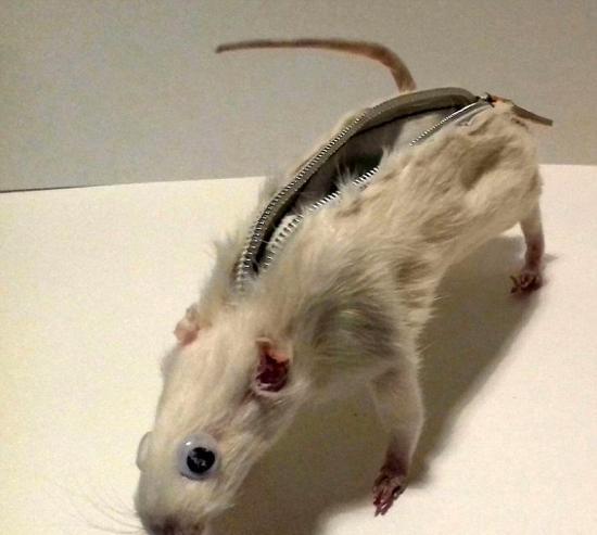 大学生用老鼠尸体制作笔袋 受到万千网友指责