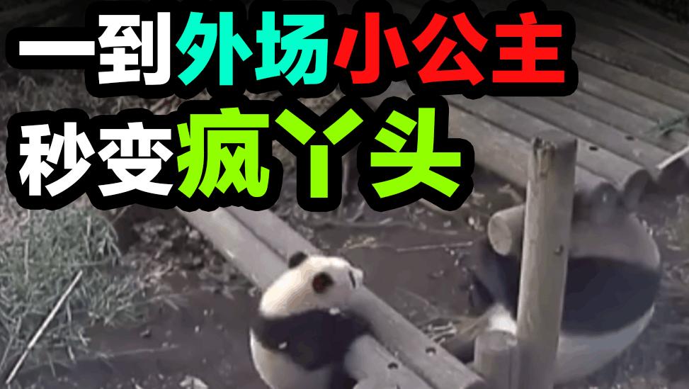 【滚滚 香香仙女】一到外场,小公主就变成了疯丫头【日本东京上野 大熊猫Pandaパンダ】