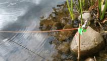"""钓鱼: 河里的这种鱼""""心""""比较大,竹棍系一个粗绳子,它也敢咬钩"""