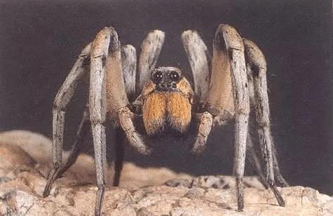 笑死了! 世界10大最丑动物排行榜, 第一名居然自带表情包
