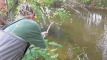 钓鱼: 山溪里这么多三文鱼,烤来吃肯定很美味