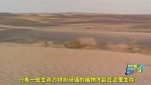 中国人在沙漠也能种水稻,国外砖家曾说不可能,看到稻谷后跪了!