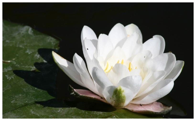 下个星期, 缘分与桃花成双成对, 收获真爱相守一生的四大生肖!