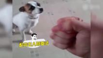 厉害了我的狗!为配合主人的拳法已拿奥斯卡了!