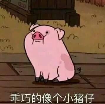微信可爱猪猪头像图片