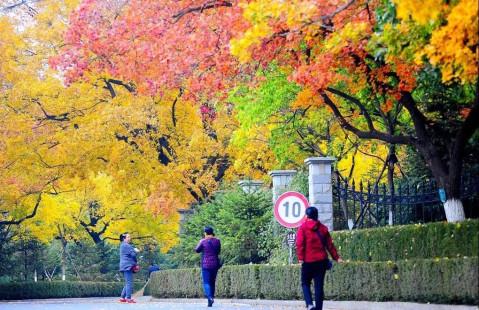 鞍山红叶风景区