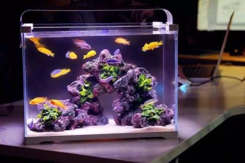他的鱼缸养鱼不死 900种观赏鱼3天送达 融资3轮月销800万