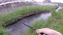 钓鱼: 水沟小,鱼儿不小!