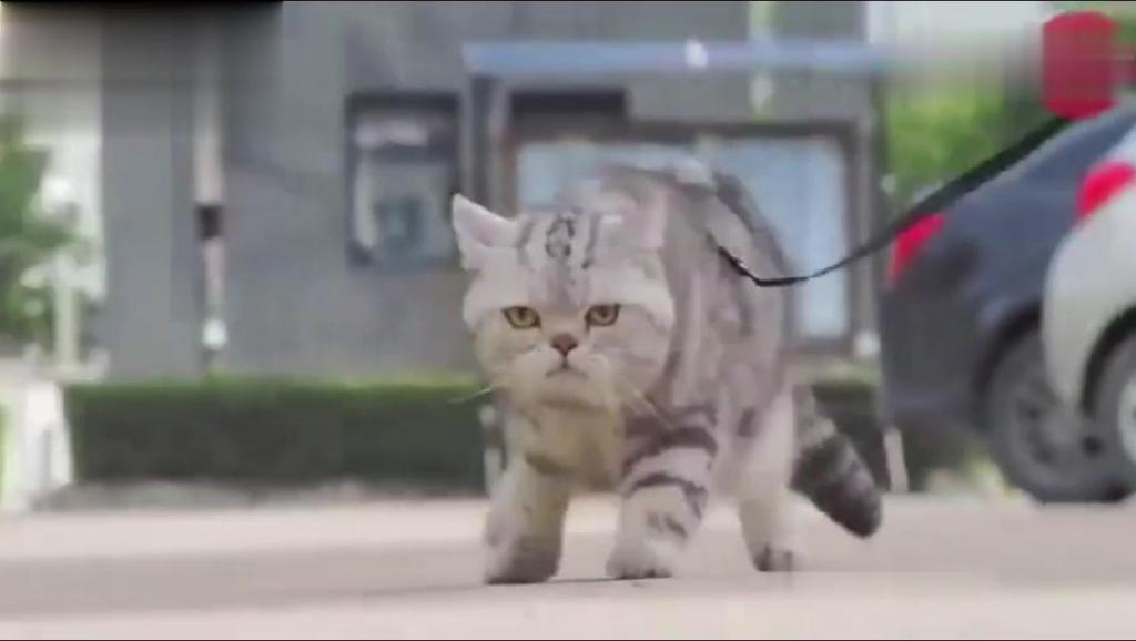杭州动物园海狮表演 打开 饥荒联机版【饥荒动物园】小宝教你造动物