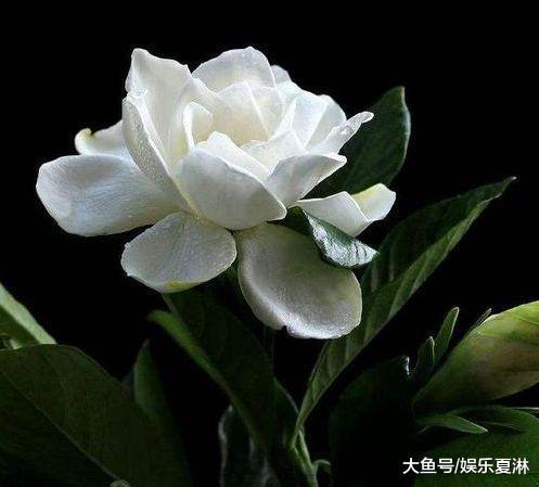 十二月底, 桃花怀念, 爱意未消, 心存真情, 再度牵手旧爱合浦珠还