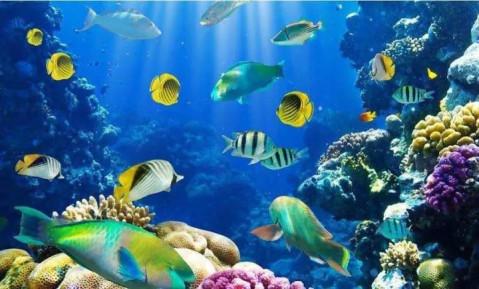 壁纸 海底 海底世界 海洋馆 水族馆 桌面 479_289