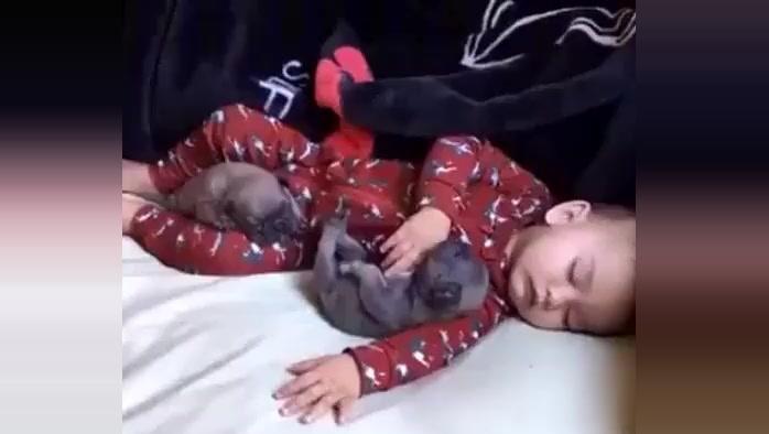 宝宝和狗狗一起睡午觉,妈妈打开房门时,眼前的一幕把妈妈暖哭了!