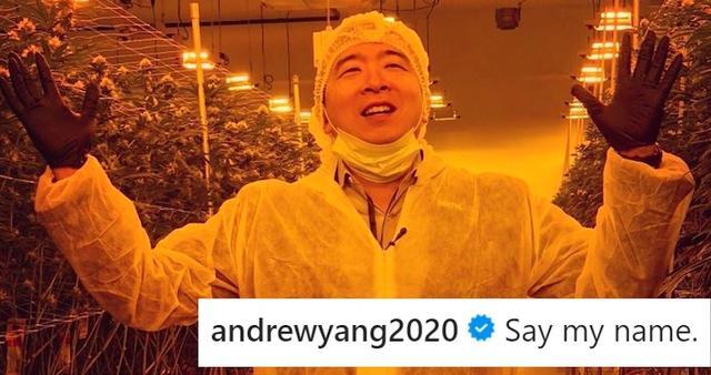 杨安泽到大麻工厂摆拍, 再次呼吁大麻合法化: 上任将赦免相关罪犯